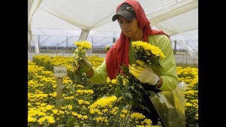 Científicos identifican gen que acelera marchitamiento de las flores