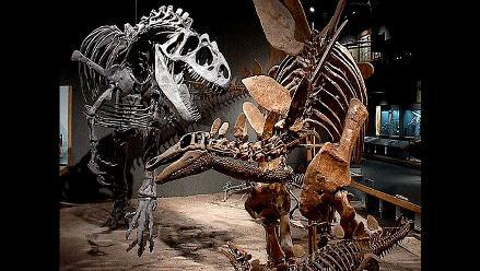 Seis cosas que quizás no sabías sobre los dinosaurios