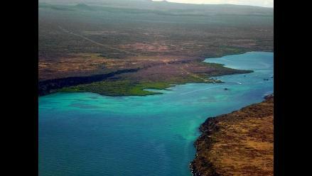 Descubren dos nuevas especies de peces en Galápagos