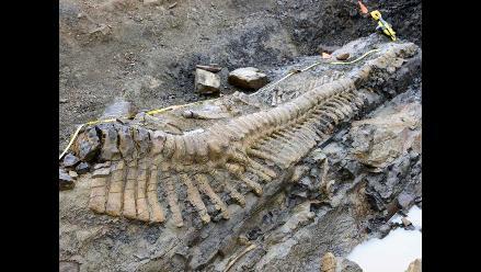 Estados Unidos repatria a Mongolia fósiles de 18 dinosaurios