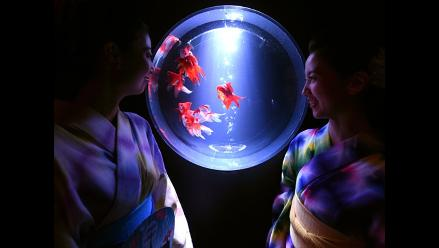 Japón: Peces, arte y color en impresionate exhibición
