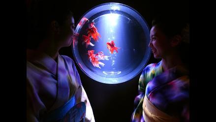 Japón: Peces, arte y color en impresionate exhibición