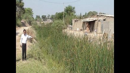 Chiclayo: falta de mantenimiento de drenes origina salinización