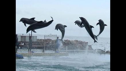 Produce: Delfines Yaku y Wayra fueron trasladados en buenas condiciones