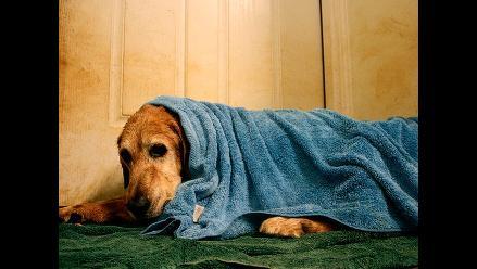 ¿Con frío?: Protege a tu mascota del invierno