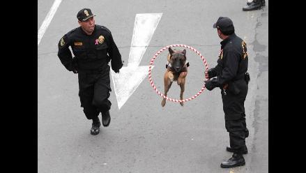 Parada Militar: show de la Unidad Canina fue el centro de atención