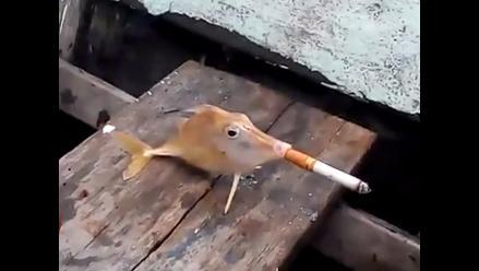 Indignante: obligan a un pequeño pez a fumar un cigarrillo antes que muera