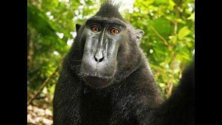 Fotografía enfrenta a Wikipedia, a un fotógrafo y a un mono