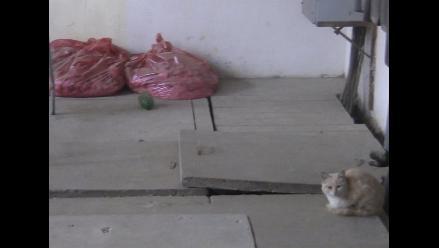 Lambayeque: gatos abundan en Hospital Referencial de Ferreñafe