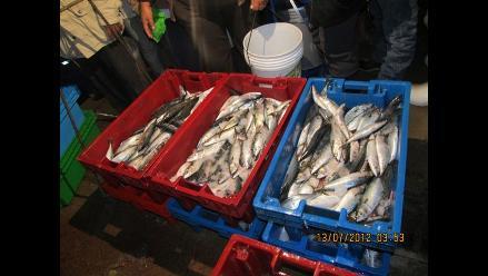 Rusia reabre mercado para importar pescado peruano