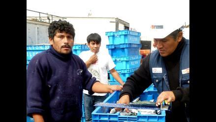 Produce incautó más de 27 toneladas de pescado juvenil