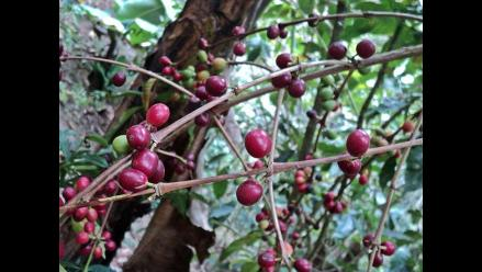 Hong Kong busca comprar espárragos y café orgánico peruano