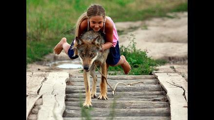 Rusia: familia adopta y domestica a manada de lobos
