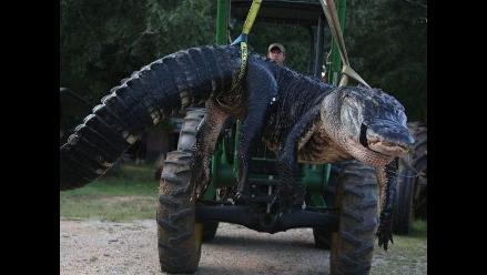 Familia de cazadores atrapó a un caimán gigante en Alabama