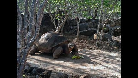 Muere tortuga gigante ´Pepe, el misionero´, un símbolo de las Islas Galápagos