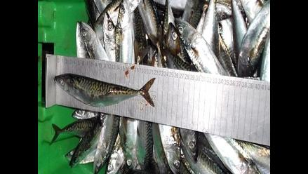 Produce intervino 10 embarcaciones que pescaban sin permiso