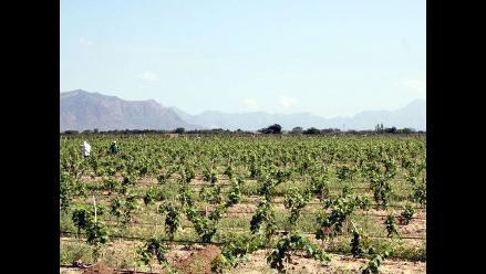 ADEX: Extranjeros visitan el norte interesados en frutas y verduras