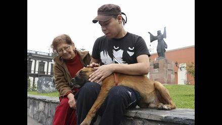 En imágenes: emotivo reencuentro entre anciana y perro perdido