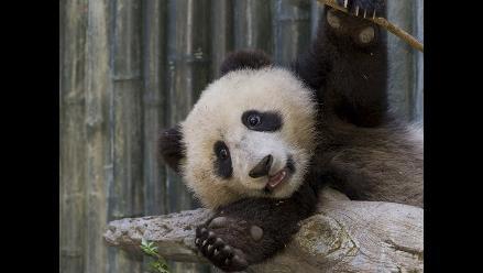 Los zoológicos más bonitos del mundo según Forbes
