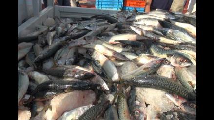 Chiclayo: decomisan 15 toneladas de caballa por no tener talla mínima