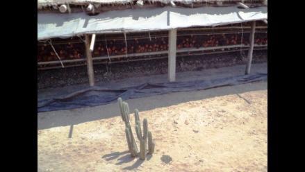 Trujillo: vecinos de Las Delicias exigen reubicación de granjas avícolas