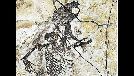 Nuevos fósiles del Jurásico explican la evolución de los mamíferos