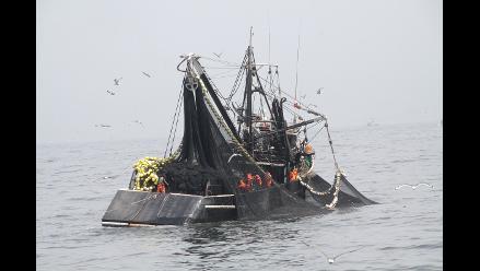 Incautan anchoveta destinada a harina de pescado