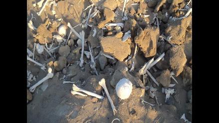 Pisco: hallan gran número de restos óseos en San Clemente