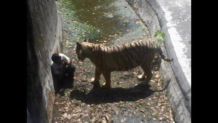 Un tigre blanco mató a un joven en el zoo de Nueva Delhi