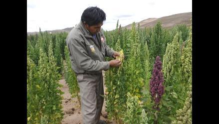 ONU premia proyecto peruano de cultivos más resistentes
