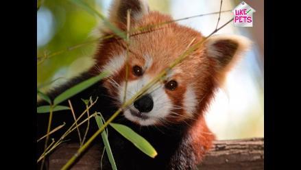 Día mundial de los animales: conoce más sobre esta fecha