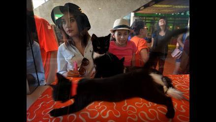 Abren una cafetería para acariciar gatos en Los Ángeles, Estados Unidos