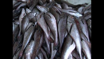 Recomiendan suspender pesca de anchoveta en el Norte Centro