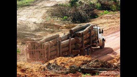 Urge implementar estrategia forestal contra tala ilegal