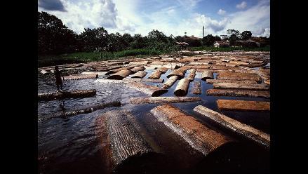Minam: 90% de deforestación amazónica es por agricultura