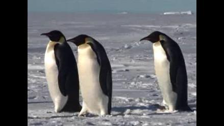 Australia propondrá creación de gran área marina en la Antártida