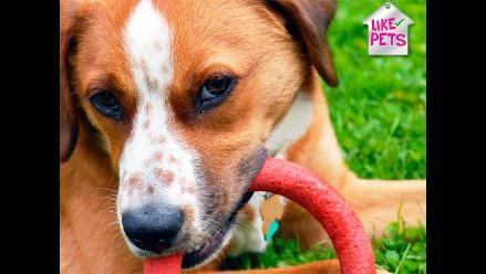 LIKE PETS | ¡A cuidar su dentadura!