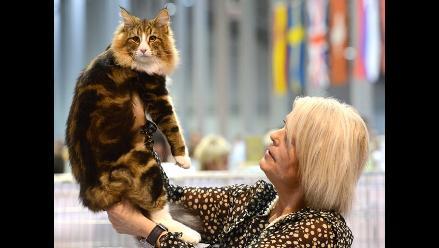 República Checa: gran exposición mundial de gatos en Praga