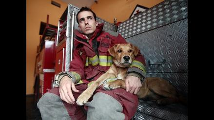 Conoce la historia de Spartan, el primer perro bombero de Breña