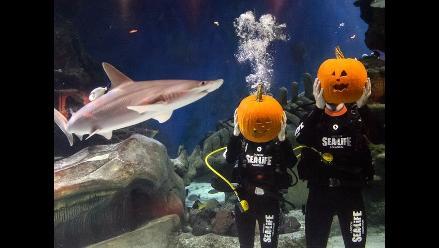 Acuario de Londres inicia celebración de Halloween con competencia