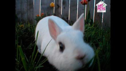 LIKE PETS | Conoce todo sobre los conejos enanos