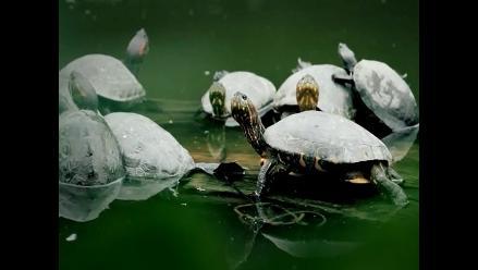 Área Purús-Manu tiene 77 especies de animales en peligro de extinción
