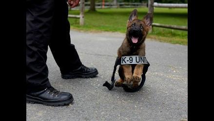 Tiernas imágenes de un cachorro policía derriten a cibernautas