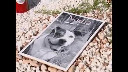 Valencia: Cementerio para mascotas aloja restos de cientos de animales