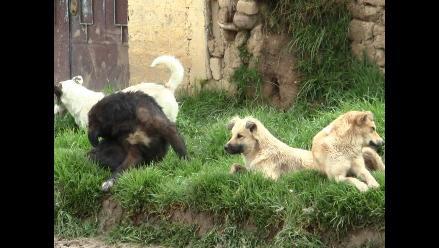 En Tarma: perro callejero ataca a niña y le desfigura el rostro