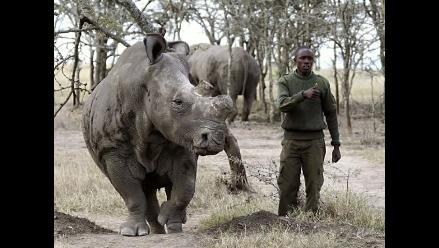 Solo quedan seis ejemplares de rinoceronte blanco en el mundo
