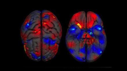 Científicos investigan el modo de utilizar la mente para activar genes