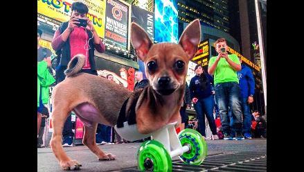 Perro sin dos patas camina gracias a ruedas hechas en impresora 3D