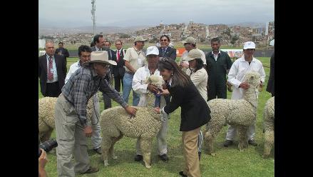 Arequipa: concretan ventas de fibra de alpaca por US$18 millones