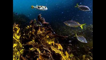 Google Maps realiza recorrido submarino 3D en la Gran Barrera de Coral